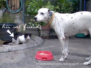 dog, Pongo, cat, friends