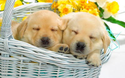 Puppy_DOg_01