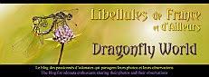 Libellenblog