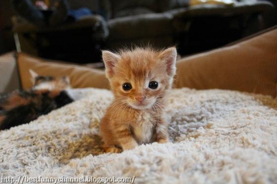 Nice cute kitten.