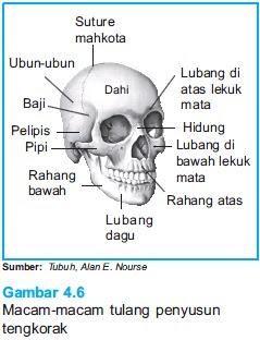 tulang diyos ang bahala Ay katunayan nang diyos ang pumili ituloy mo, apo, bahala na ako neneng: kung gayon, leonardo, tugunin mo ito kung tayo'y makasal, ay nanaisin ko.