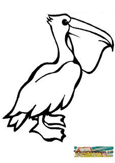pelicanoparacolorear