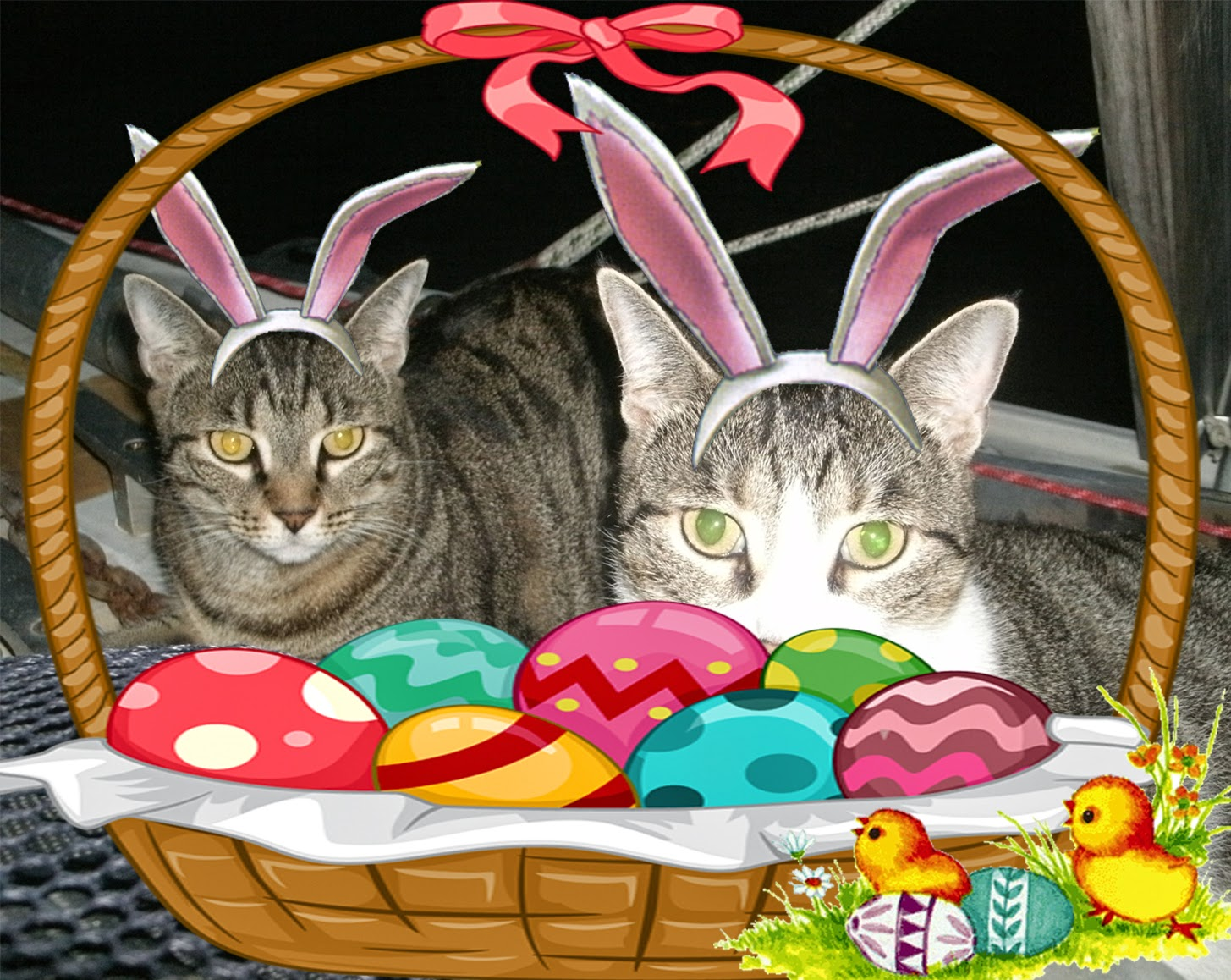 Easter cats