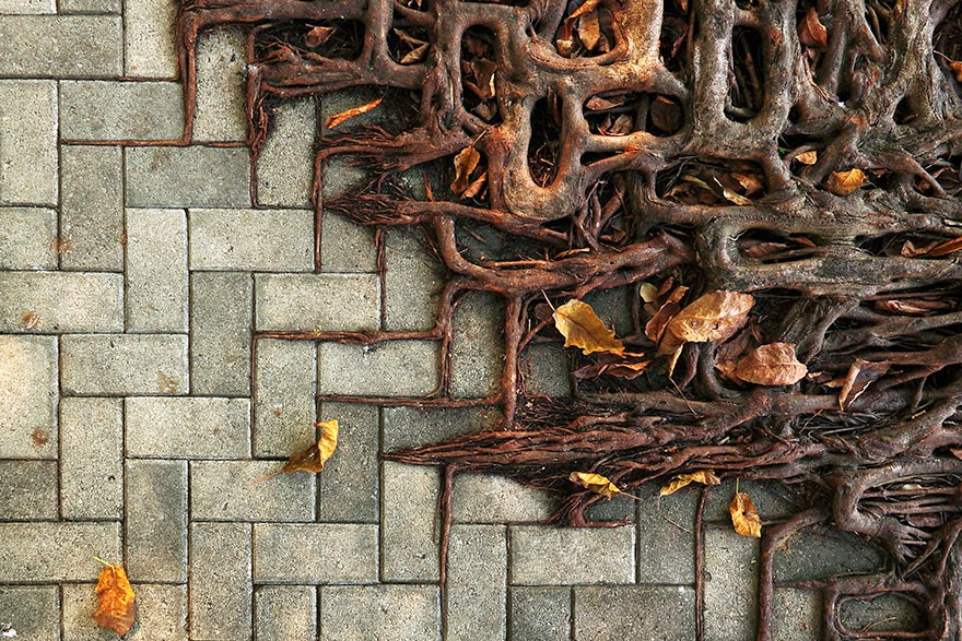 10 Tree Roots Winning Their Battle Against Concrete