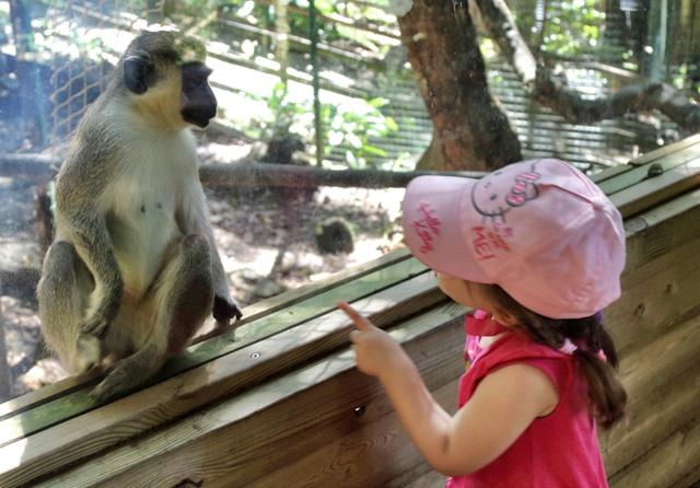 Mono en Parque Les Mamelles