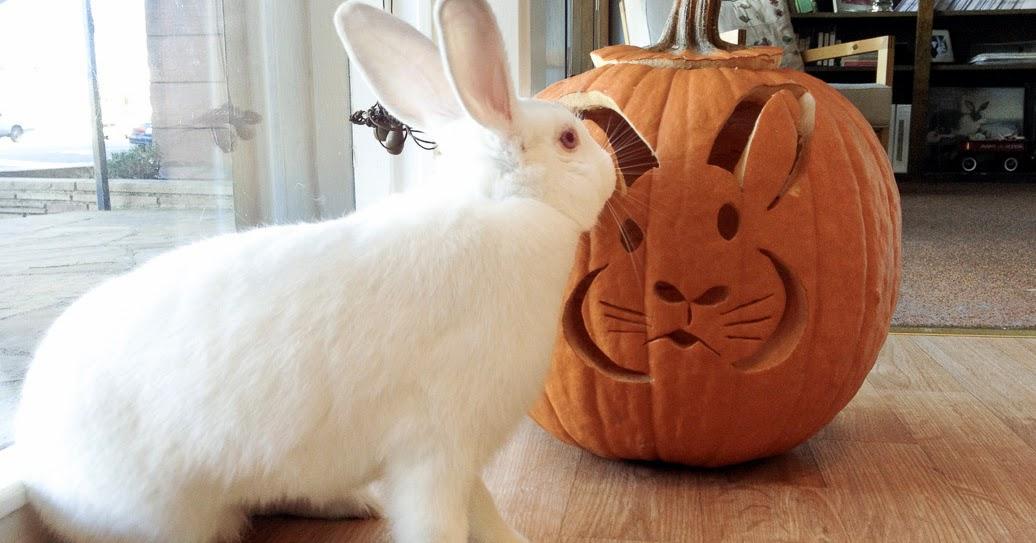 Rabbit ramblings bun o lanterns bunny pumpkins for