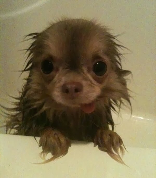 Cute dogs (50 pics), dog pictures, cute puppy takes a bath