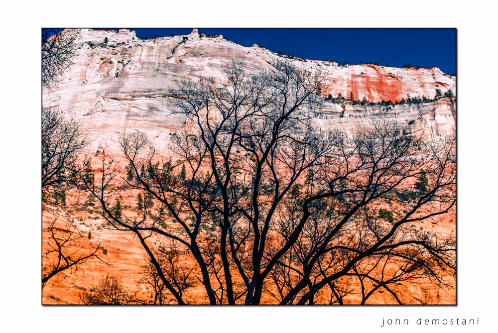 Tree Silhouette Zion National Park, Landscape Photography, Mountains, rocks, rugged terrain, sunset, colorful geological features, golden rocky mountains,trees at sunset