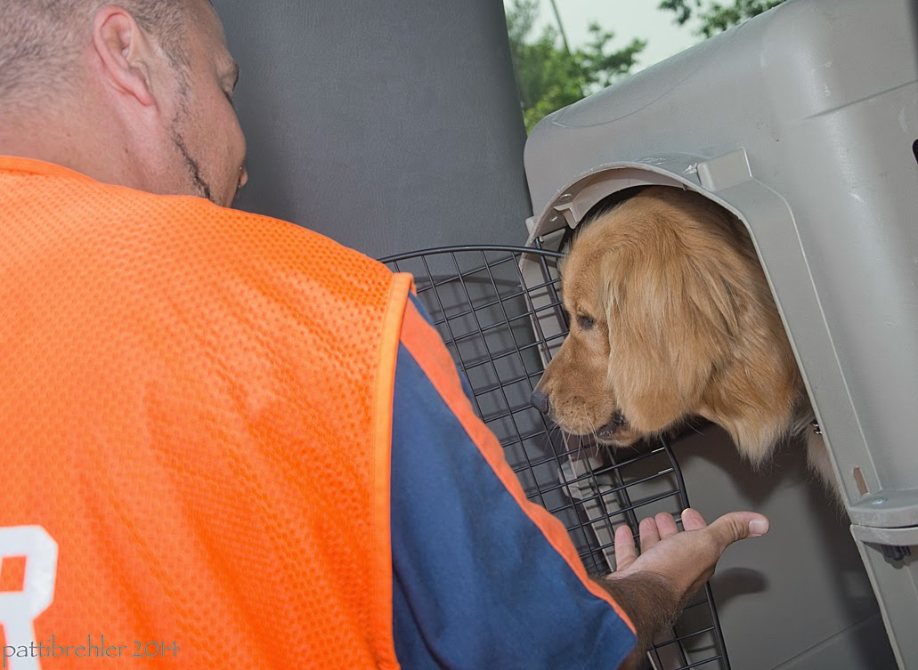 A man wearing a blue shirt and an orange vest is reaching his right hand toward a golden retriever that is sticking his head out of an airline crate. The man is facing away from the camera toward the dog.