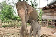 รักช้าง