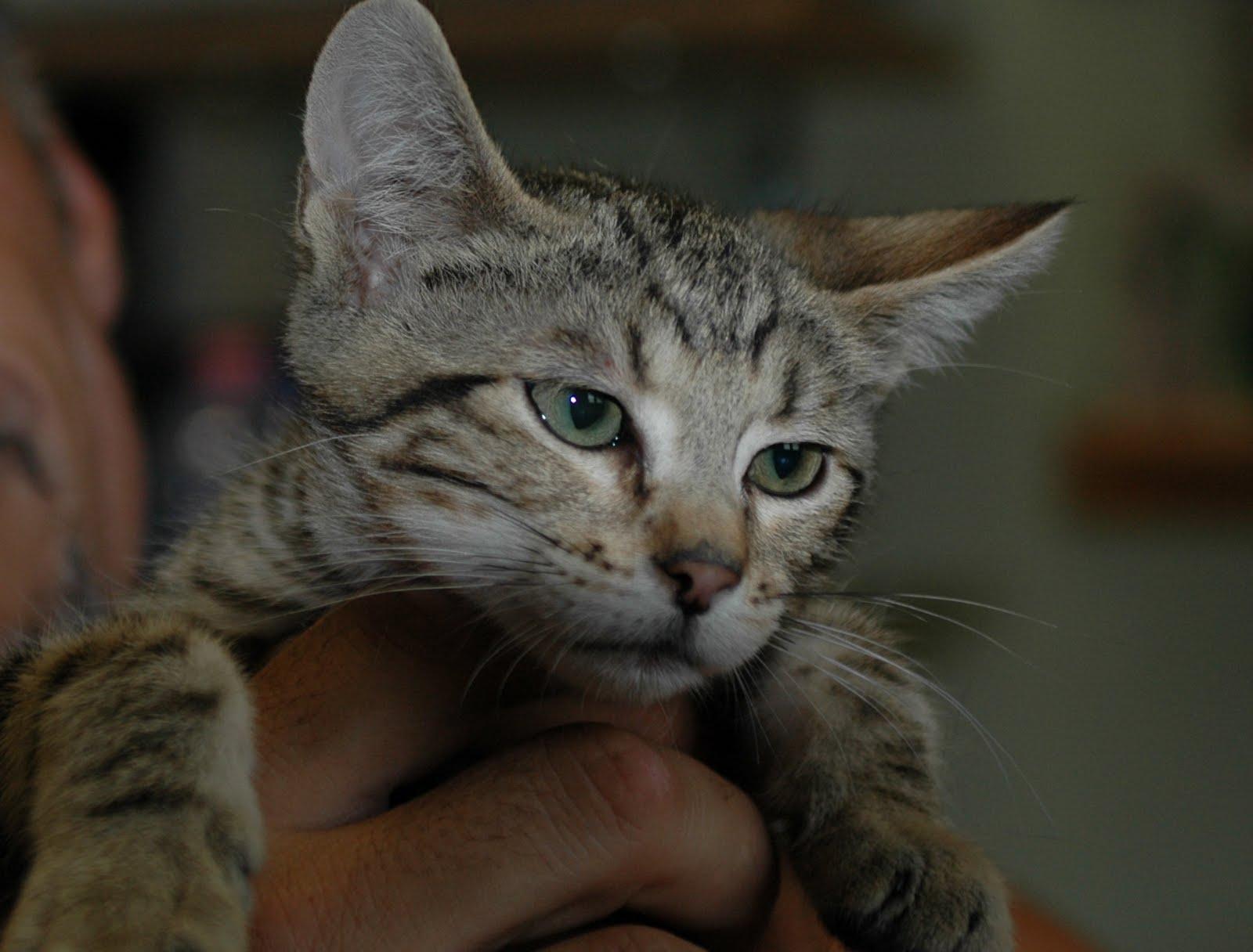 Emergenza al gattile a m a la casa degli orrori