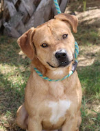 ADOPTABLE DOG OF THE WEEK!!! Click photo for all info AND a video! PLEASE OPT TO ADOPT!