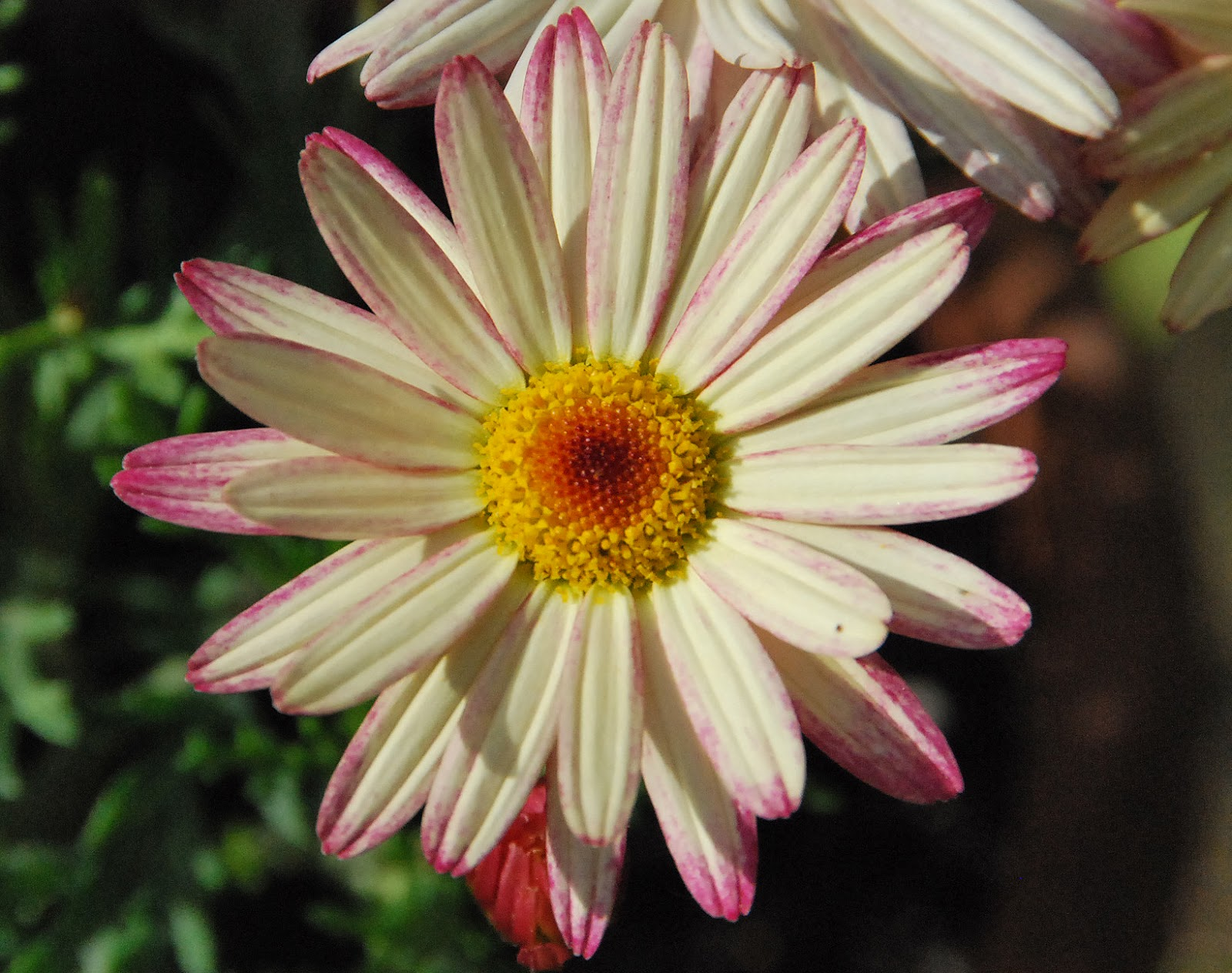 ¿Cómo encontrar varios tipos de flores? eHow en Español - Fotos De Varios Tipos De Flores