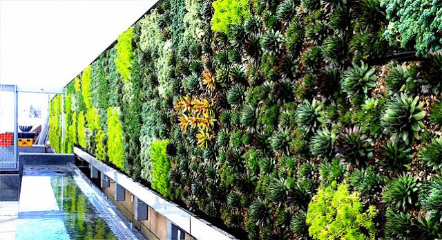 Marbella trade s a s muros verdes verticales ecologicos - Muros verdes verticales ...