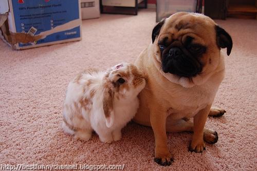 Funny dog and bunny.