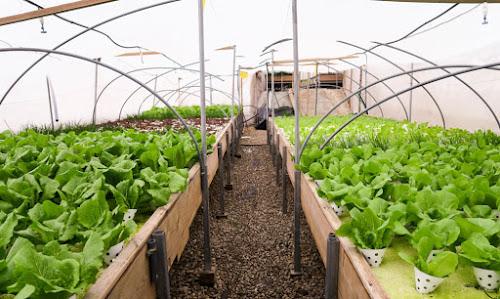 Uma fazenda incrível no telhado do shopping mais antigo de Israel onde cresce milhares de vegetais