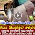 Cobras Carry Gems On Their Hoods - (Watch Video)