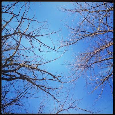 Copas de árboles, de fondo el cielo azul, hermoso.