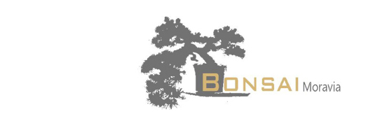 Bonsai Moravia Blog