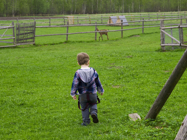 farm, green, little boy running