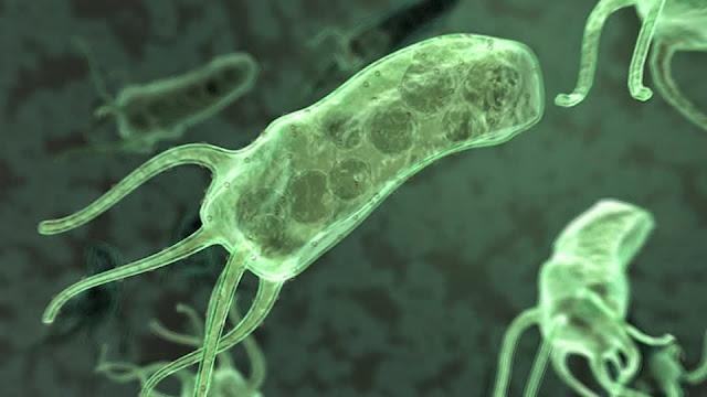 Infeksi Kuman Helicobacter Pylori