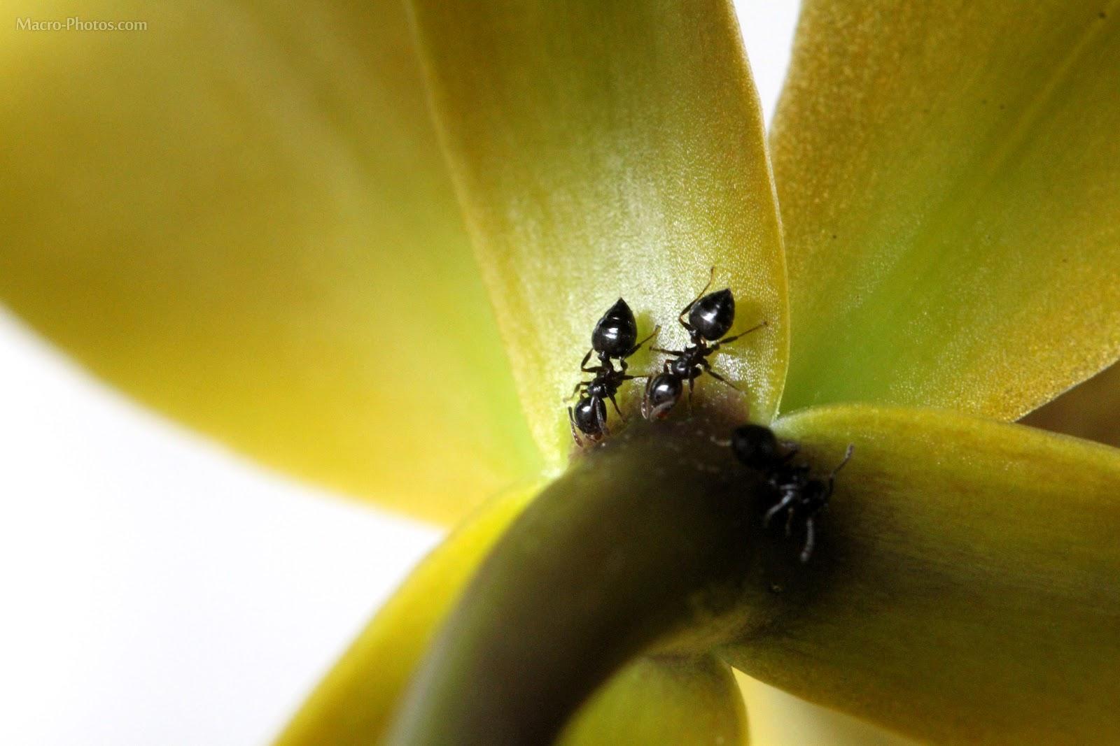 http://1.bp.blogspot.com/-EQaH9Bh3p5U/T-2yahsMkTI/AAAAAAAADaU/U8650L83agI/s1600/Ants+wallpapers+11.jpg