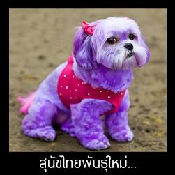 สุนัขไทยพันธุ์์ใหม่...