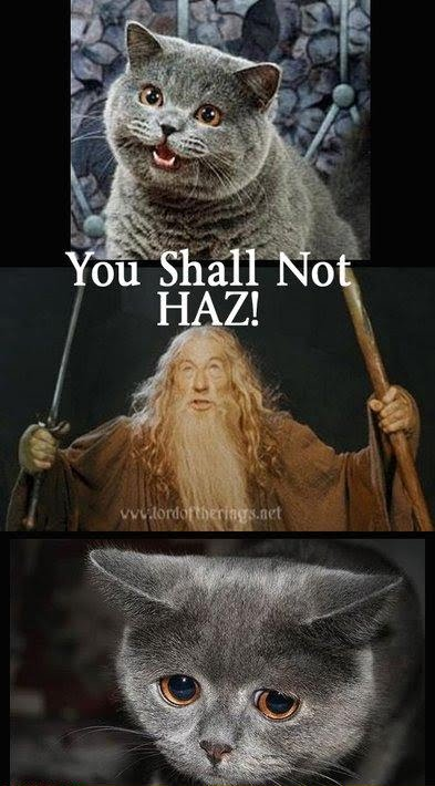 You Shall Not Hasz