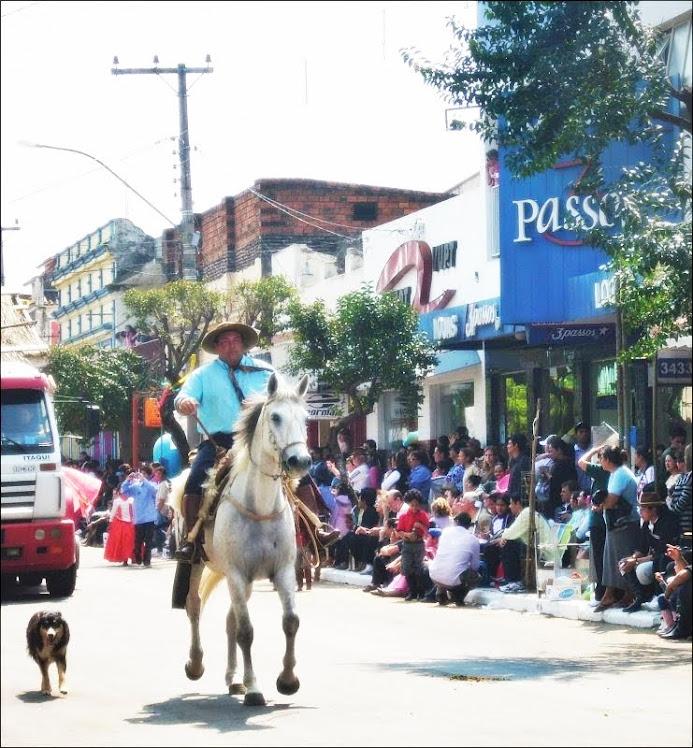 cavalos do sul