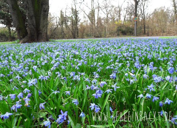 Blaues Blumenmeer, rehlein backt
