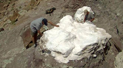 Utah paleontologists want to move dinosaur fossils