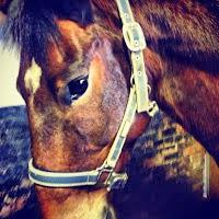 Leo the Thoroughbred Horse