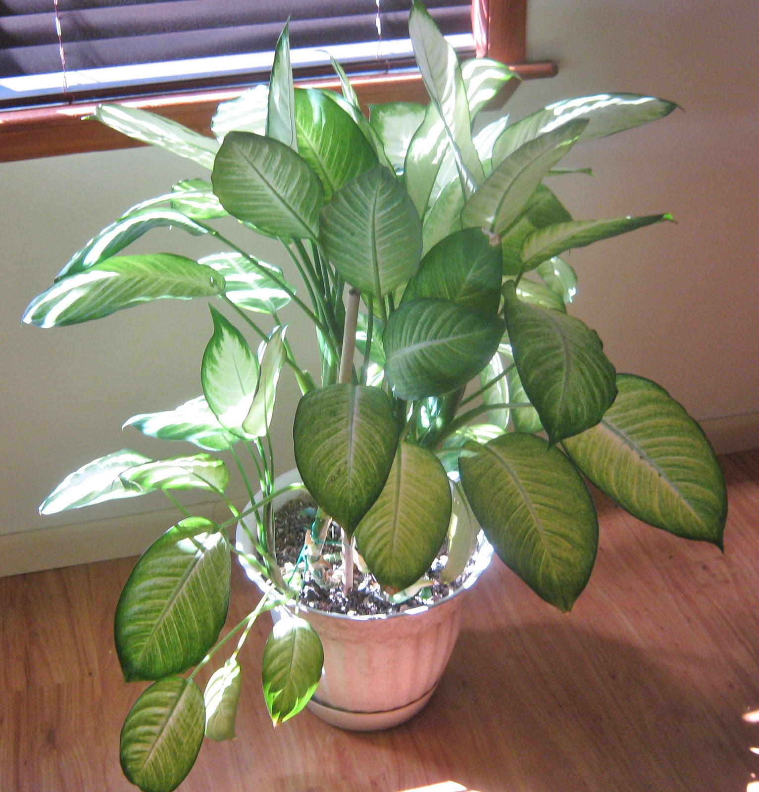 watering house plants - Identifying Common House Plants