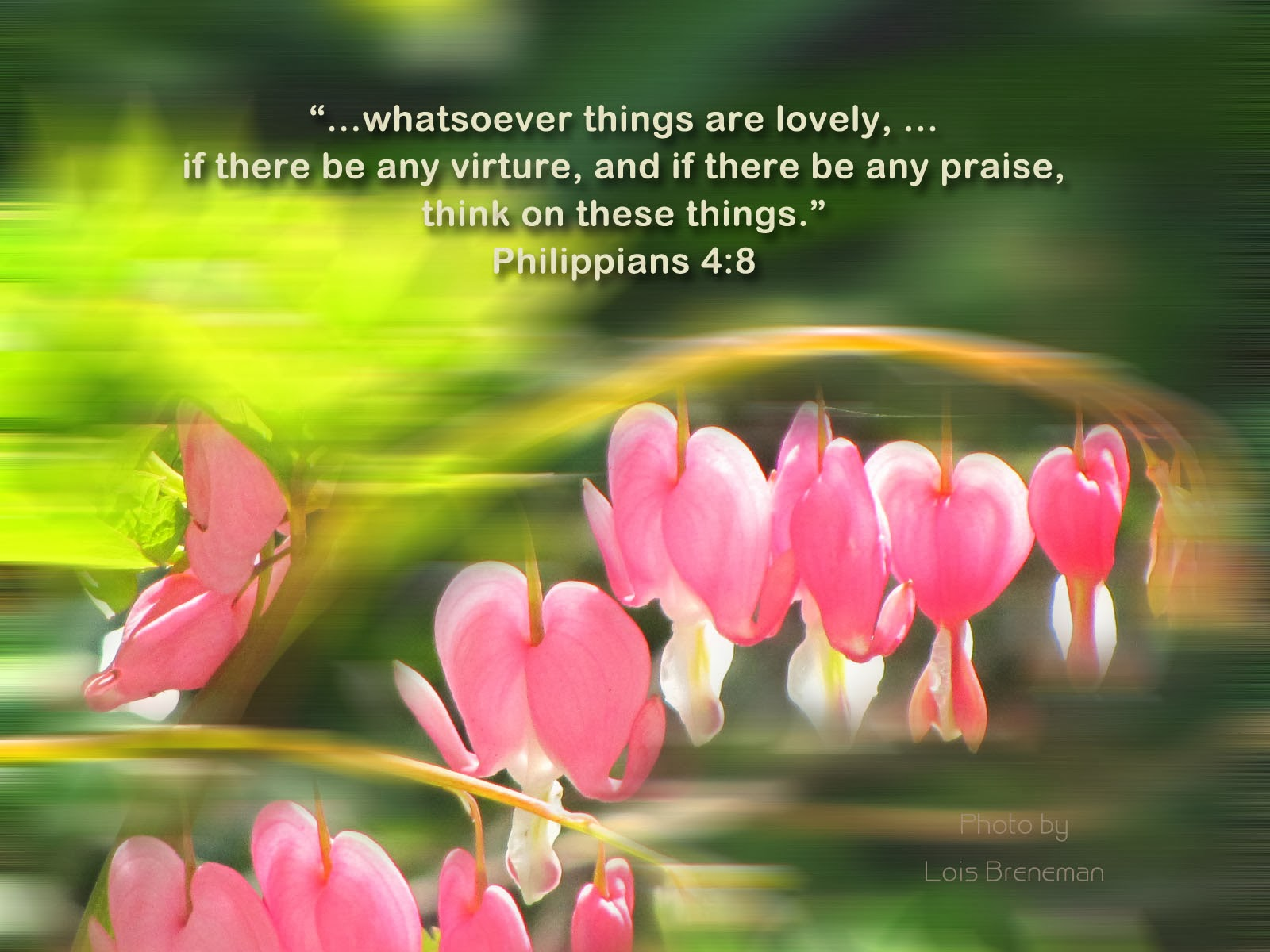 Bleeding Hearts - Philippians 4:8