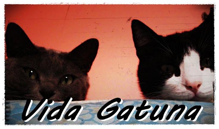 Vida Gattuna