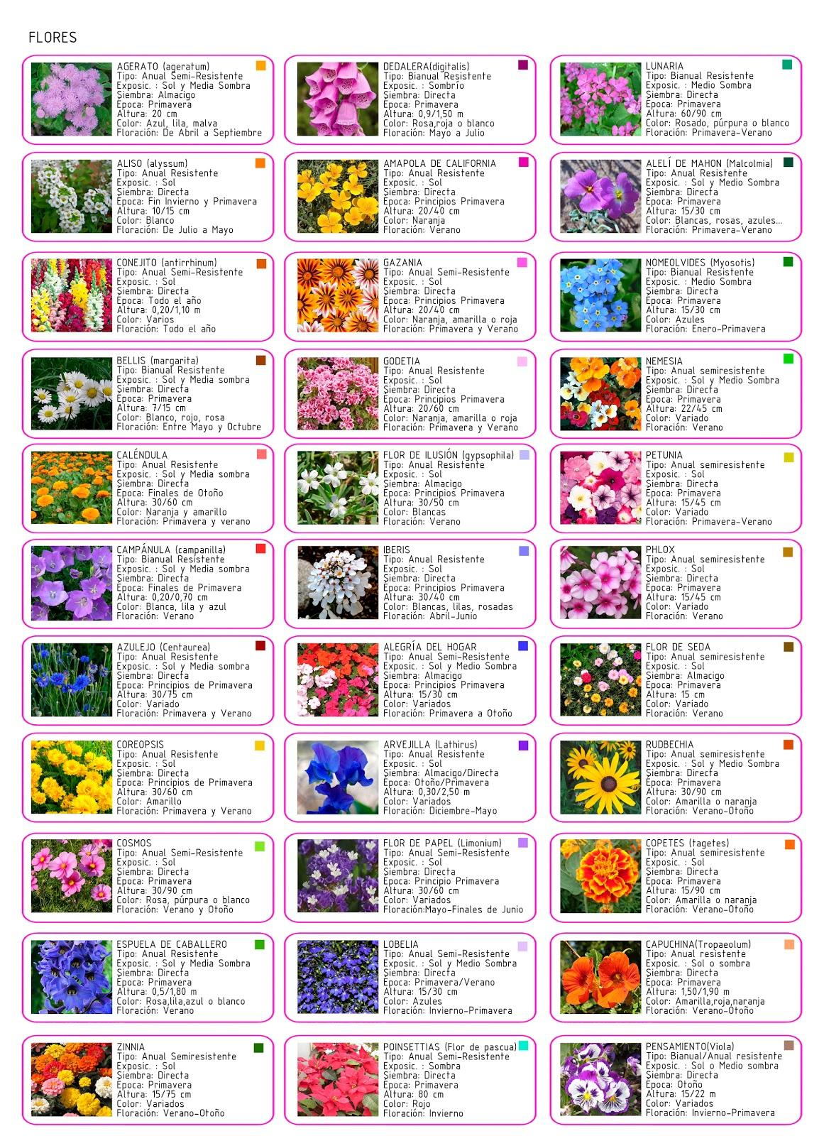 Marta villanueva entrega 5 de noviembre conjunto de tres for Catalogo de flores de jardin