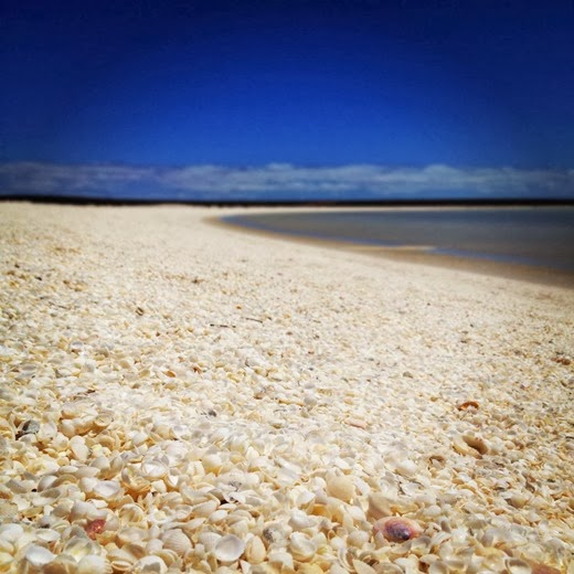 Shell beach in Australia