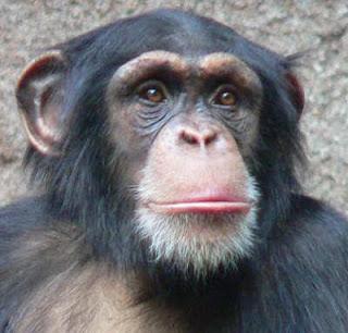 """Oliver """"Simpanse Setengah Manusia"""""""