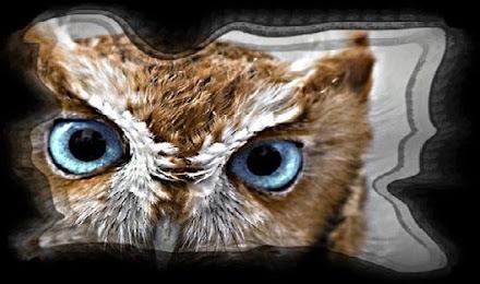 Secret Owl Society