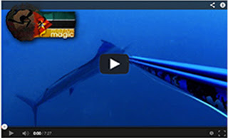 Mozam Magic spearfishing video with Rob Allen