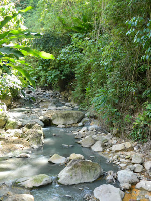 Diamond Botanical Gardens stream Soufriere St. Lucia by garden muses-not another Toronto gardening blog