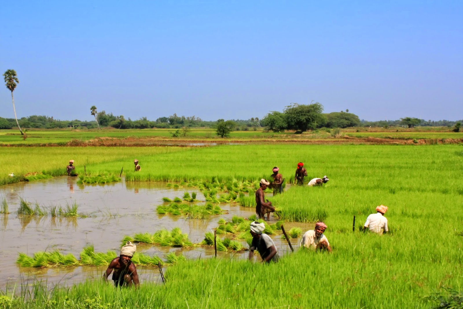 Arseninc in water and paddy fields can cause DNA damage.