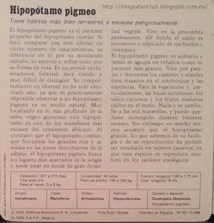 Blog Safari club, características del Hipopótamo pigmeo