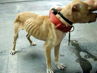 animal cruelty introduction