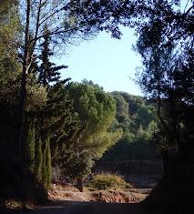 Camins comarcals