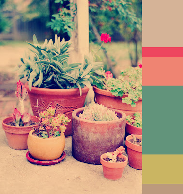 air and sea design erin curry succulents floral color palette summer patio