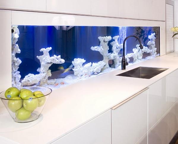Splash back aquarium by Darren Morgan
