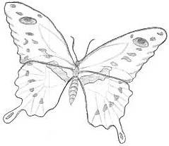 Line Drawing :: Clip Art :: Butterfly