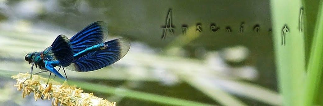 Arsenic.pl