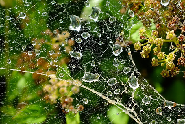 Waterdrops on spiderweb macro shot